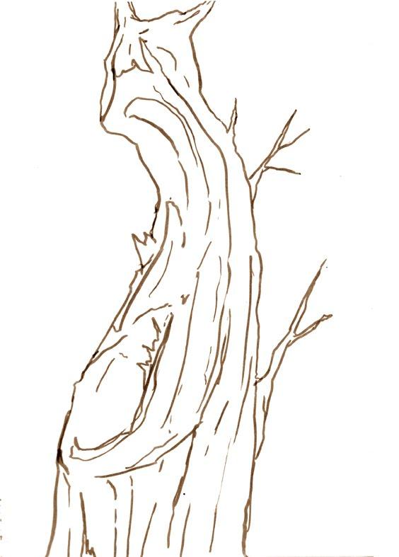 Dibujos de troncos - Imagui